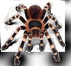 Spider Lab